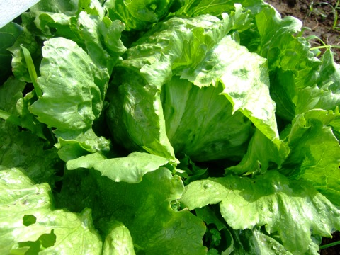 greenleaf01.jpg